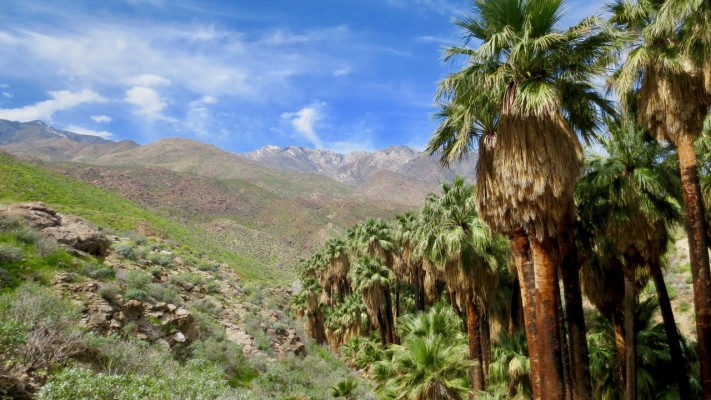 Palm Canyon Trail, Indian Canyons